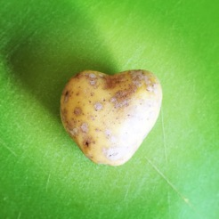 Potato Love <3